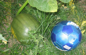 Our pumpkin next to the soccer ball
