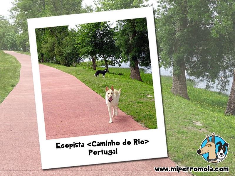 5 Rutas con Perro para Disfrutar del Senderismo Ecopista Caminho do Rio Portugal