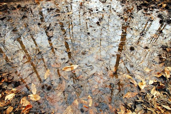 Riflesso d'autunno di pino13