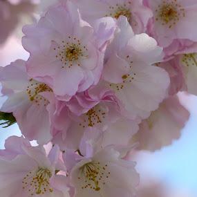 Spring, spring, spring.... by Francesco Altamura - Flowers Flowers in the Wild ( spring flowers, park, flowering, blossoming, flowers, springtime, spring )