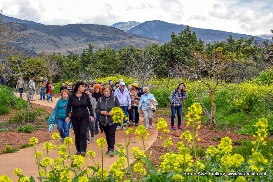 Пешеходный маршрут на экскурсии в заповеднике Тель Дан в Израиле.