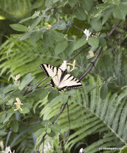 Photo: Butterflys at Little River State Park