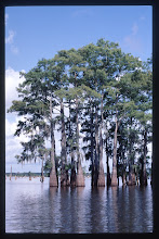 Photo: bayou Louisiane