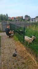 Photo: socialiseren op de kinderboerderij (Max)