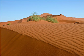 Photo: deserto del Namib