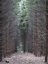 Photo: Bäume am Sonnenhang in Hilchenbach