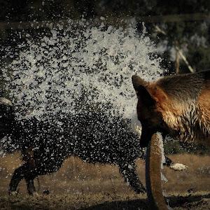 Water Fight.jpg