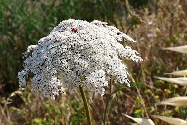 Maggio fioritura di campo di ariosa
