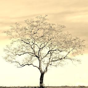Standing Alone by Patti Reddoch - Landscapes Travel