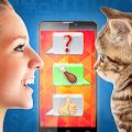 Kitty translator prank