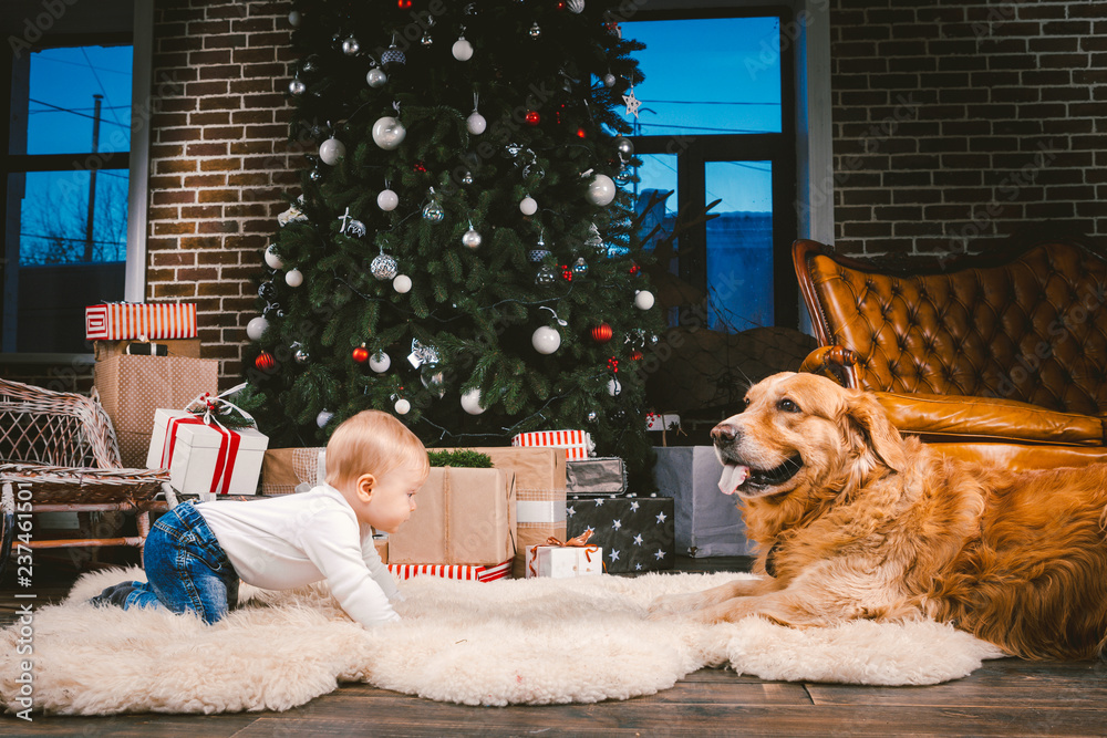 Keep Christmas Tree Rental Safe From Kids & Pets