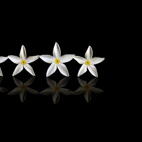 almost five star by Hari Darmawan - Nature Up Close Flowers - 2011-2013 ( nature, arie, star, white, flower )