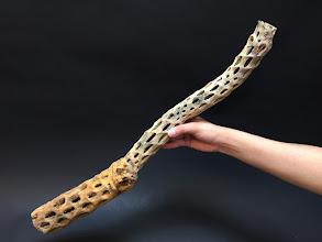 Photo: No.44-スケルトンウッド(スケルトンカクタス) 枝もの~くねり系 最長高57cm×最大幅13cm ¥4,680- フラワーショップ江口