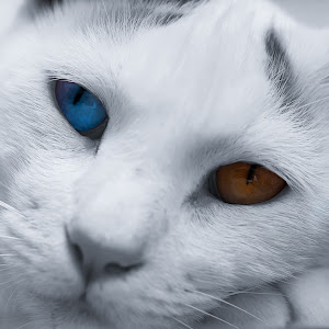 Vesper Eyes.jpg