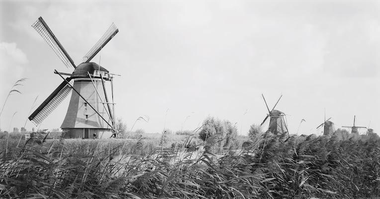 Mulini d'Olanda di cro2390