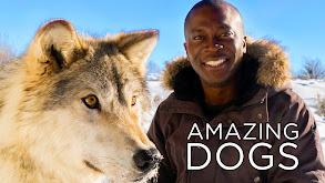 Amazing Dogs thumbnail