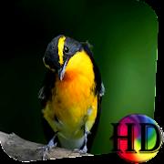 Exotic Bird Live Wallpaper