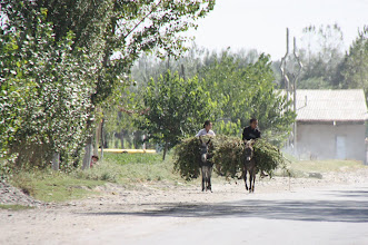 Photo: Day 166 - Between  Samarqand and the Border- Donkeys with Loads