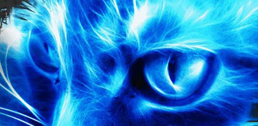 Descargar Neon Cat Live Wallpaper Para Pc Gratis última