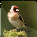 goldfinch master icon