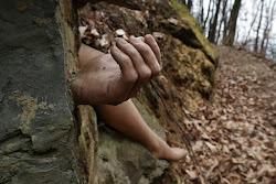 strani incontri nel bosco