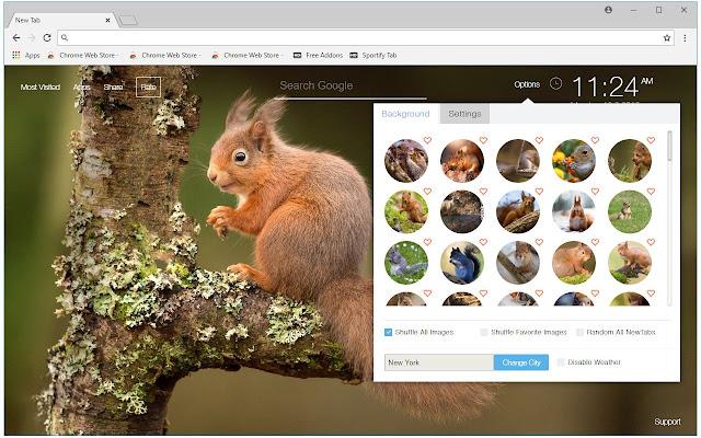 Squirrel HD Wallpaper Cute Squirrels New Tab
