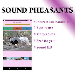 Pheasant phonetically - náhled