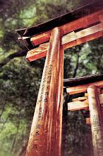 Photo: One of the many torii gates at Fushimi Inari.