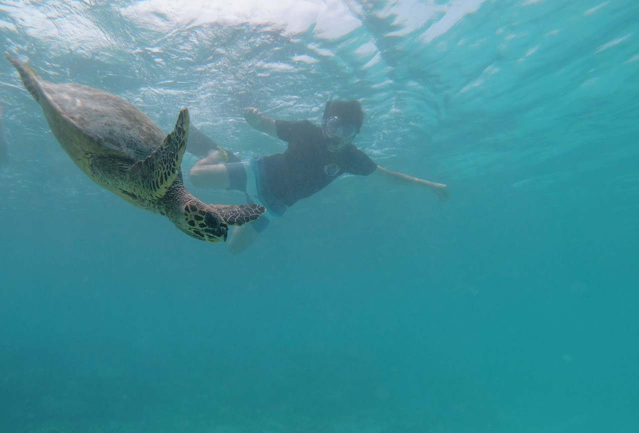 snorkeling tortugas maafushi
