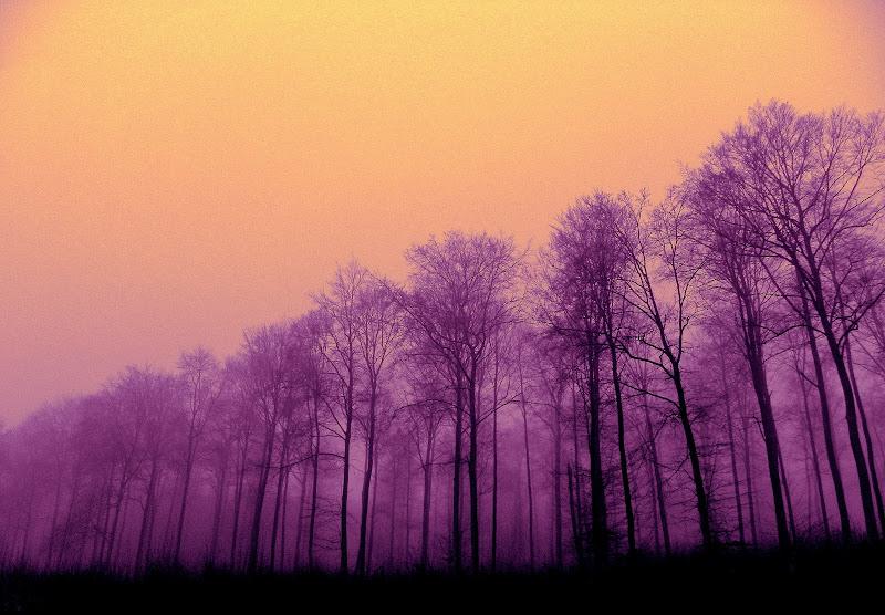 Il Viola e la nebbia di mariateresacupani