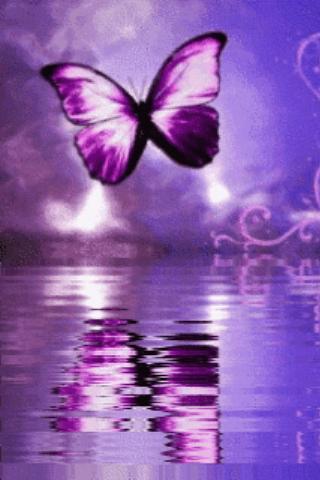 Purple Butterfly Reflected In Screenshot 1