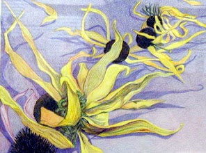 Photo: Blackeyed Susan Seedpods . colored pencil . 10x12