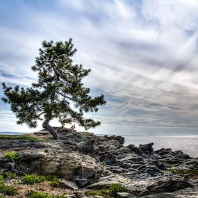 The Talking Tree by Joe Palisi - Landscapes Beaches ( tree, beach, landscape )
