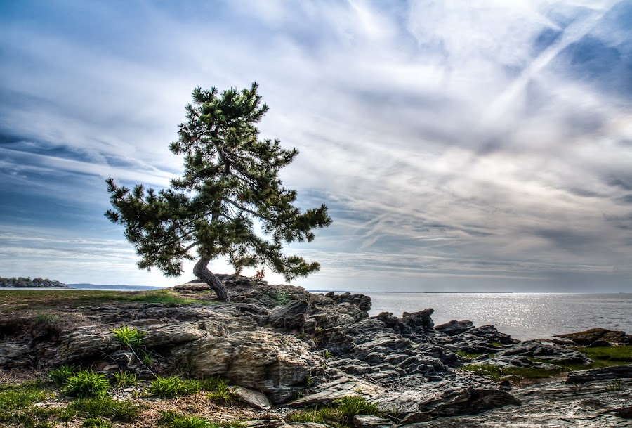 The Talking Tree by Joe Palisi - Landscapes Beaches ( tree, beach, landscape )
