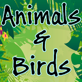 Animals Bird and Insects Sounds