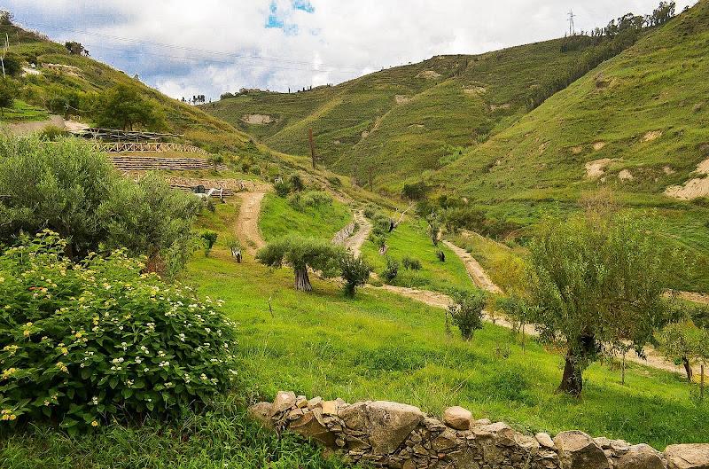 Paesaggio campagnolo di Maggio's photography