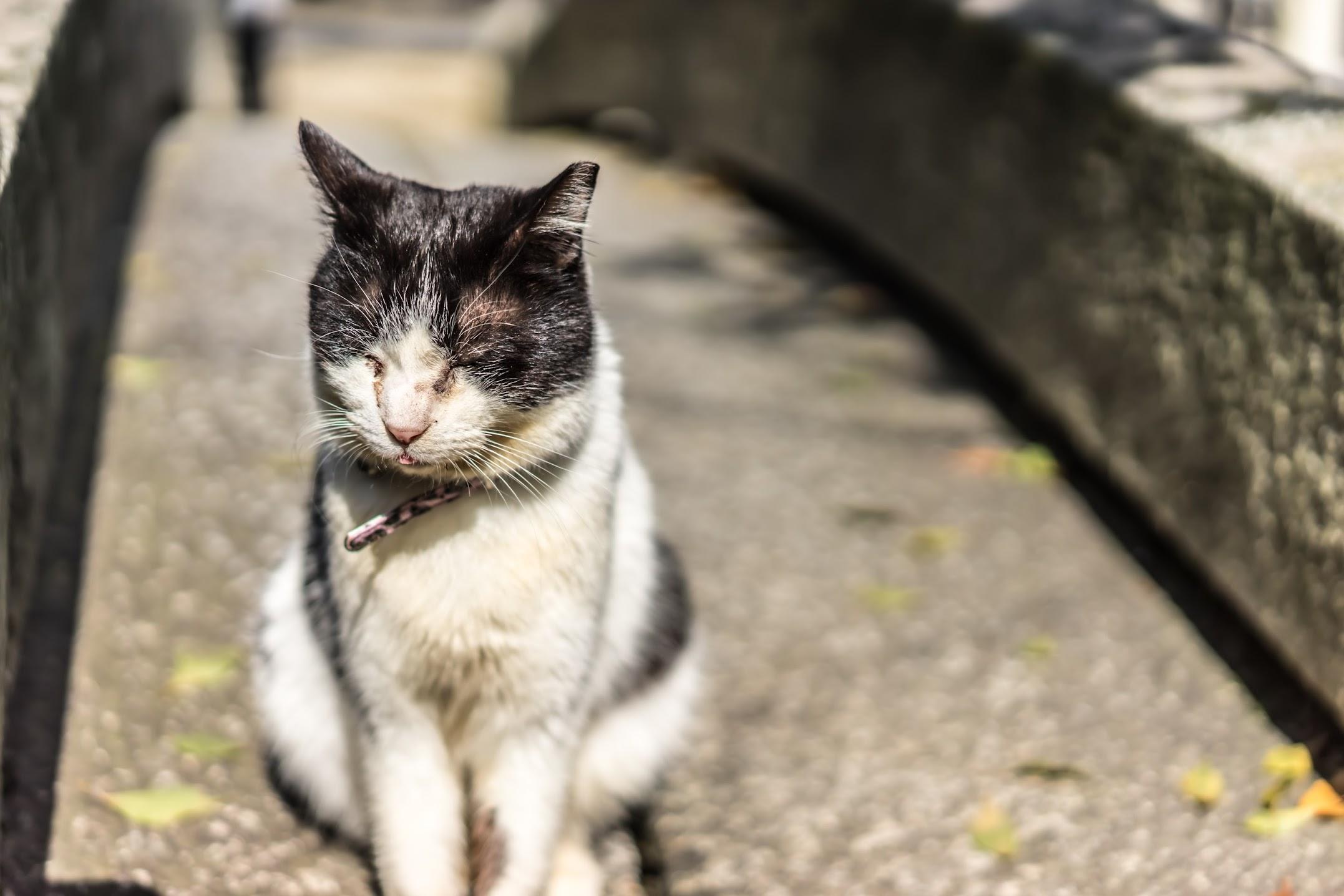 onimichi cat
