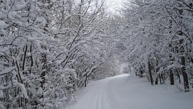 Photo: Winter wonderland