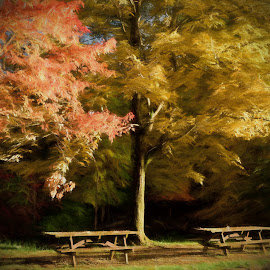 Late Afternoon Sunshine by Millieanne T - Digital Art Things
