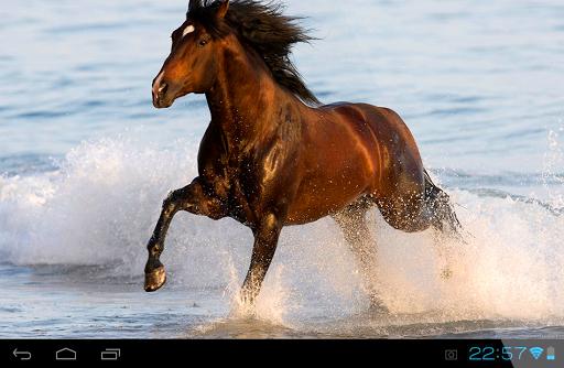 Horses Live Wallpaper|玩個人化App免費|玩APPs