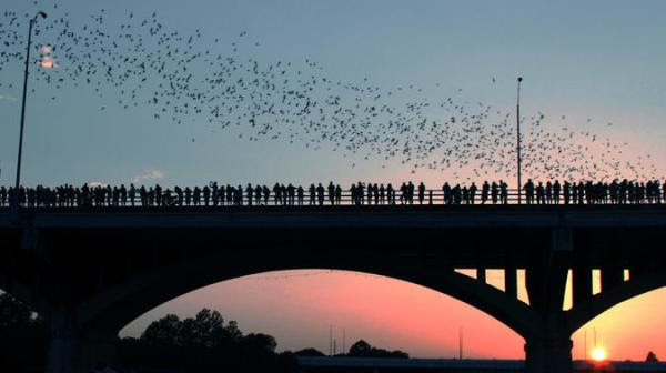 Morgos da Congress Bridge - Austin