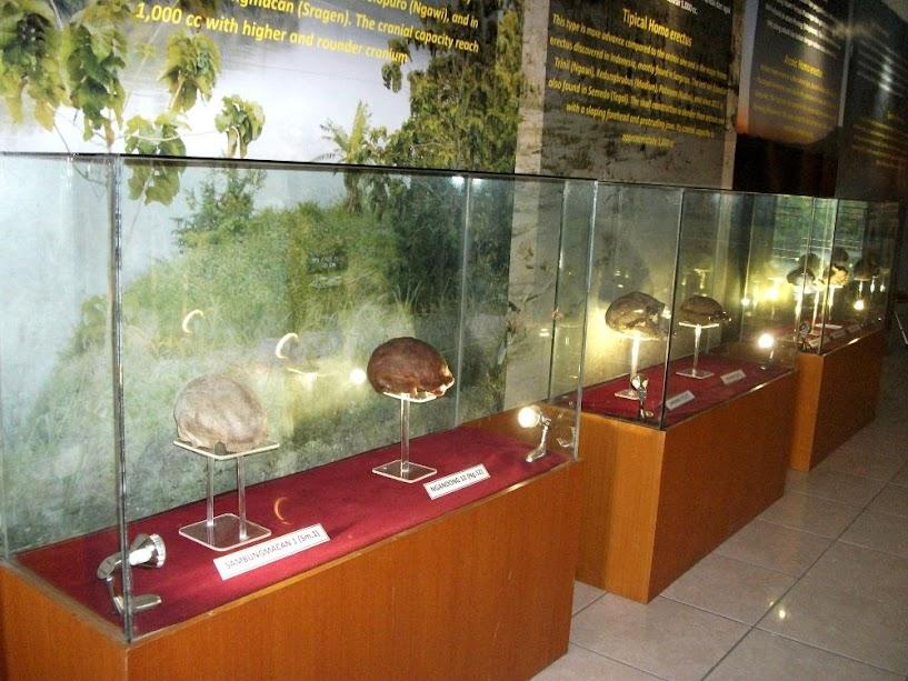 Perbandingan otak dari spesies-spesies manusia purba
