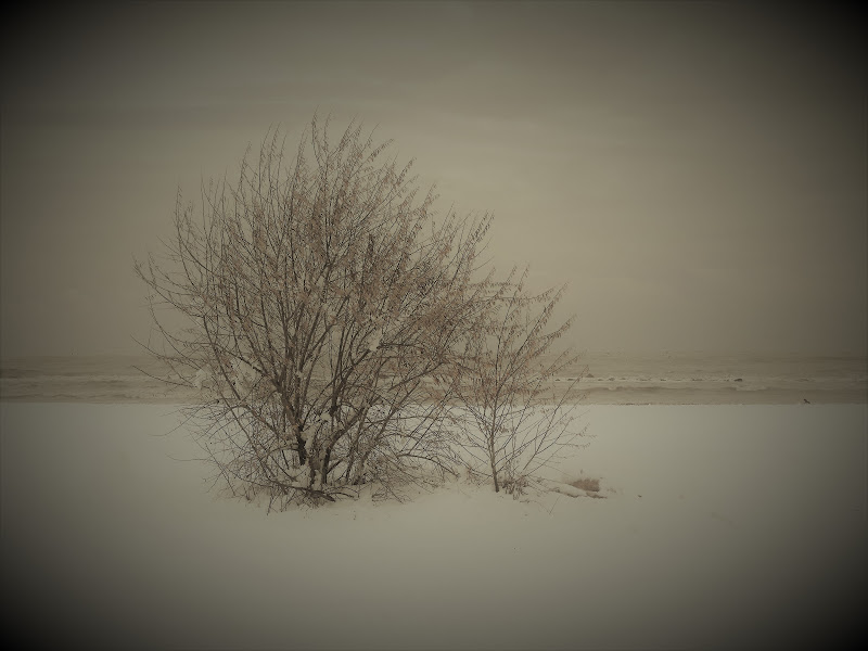 mare d'inverno di maxmax