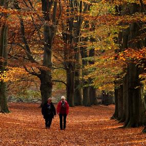path by Hilda van der Lee - Landscapes Forests ( friends, nature, autumn, path, forest, colours,  )