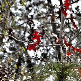Autumn Reds by Debbie Squier-Bernst - Nature Up Close Leaves & Grasses
