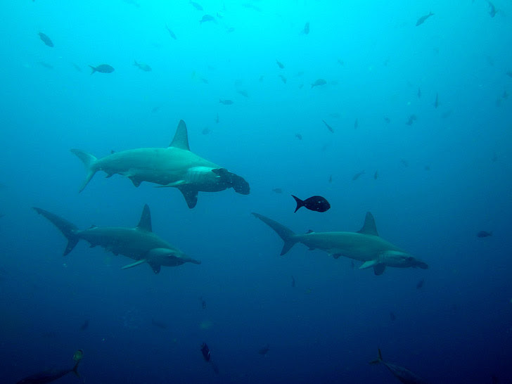 Gordon Rocks, Galapagos Islands (25 Best Dive Sites in the World to Put on Your Bucket List).