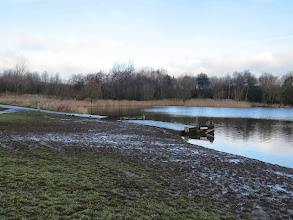 Photo: 27 Jan 14 Priorslee Lake The muddied area in the SW corner – Swans, Coot and Black-headed Gulls mainly responsible for trampling the grass. (Ed Wilson)