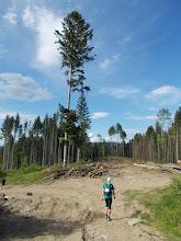 Photo: Volóctól délre sok az erdőirtás, az erdészeti technológia súlyosan megrongálta az utat