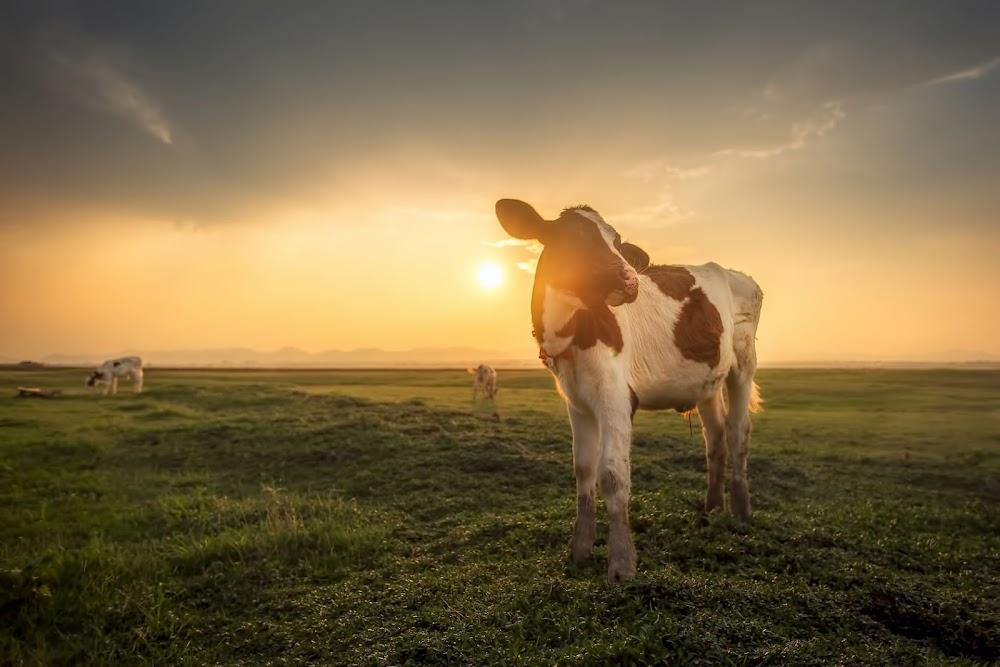KYK | Studente wat opspraakwekkend agtervolg en vee doodmaak - TimesLIVE