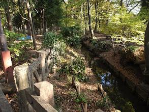 Photo: 伐採地に隣接する玉川上水の遊歩道。貴重な生態系。